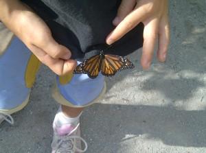 butterfly brookgreen
